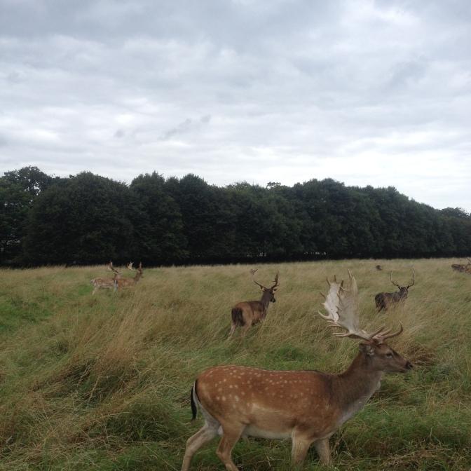 deer-phoenixpark01